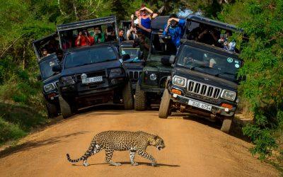 Photographic Safari Tour In Sri Lanka