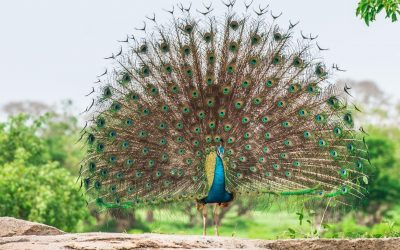 Bird Watching In Sri Lanka