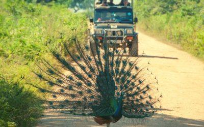 Birding Holiday Tour Sri Lanka