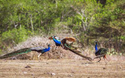 Discover The Marvellous Wildlife In Sri Lanka